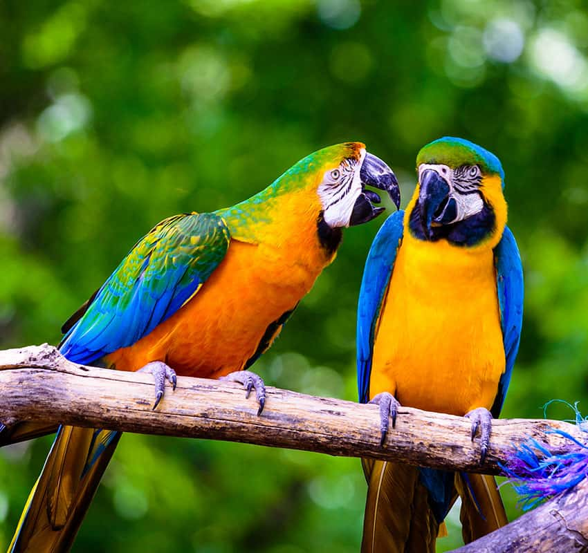 Avian Partners