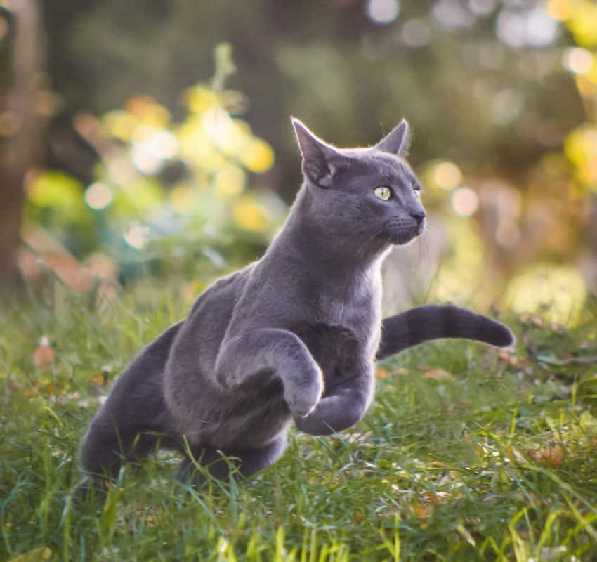 Grey cats in fields