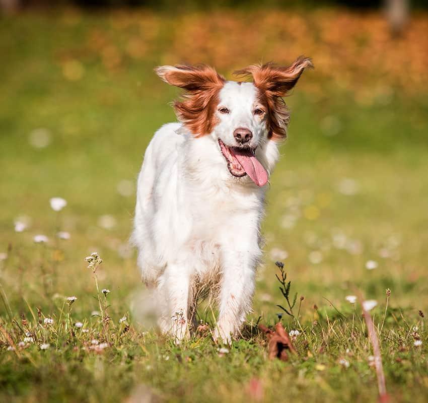 Happy Dog on fields