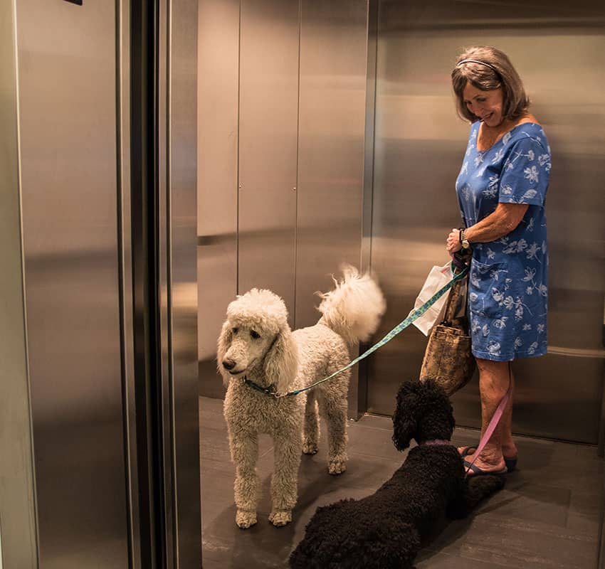Lady with her 2 dogs