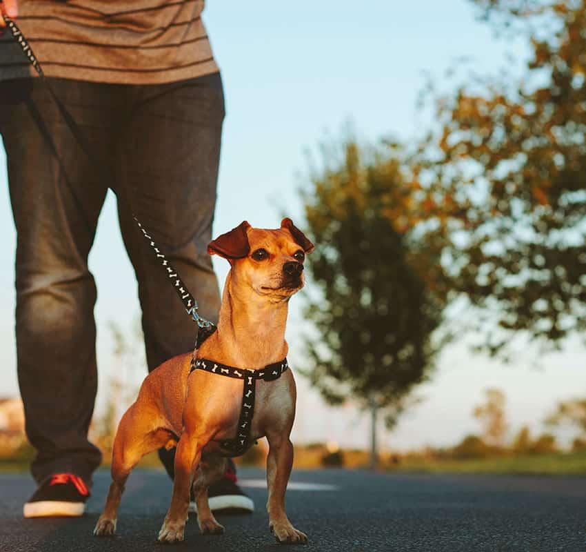 Dog on the leash