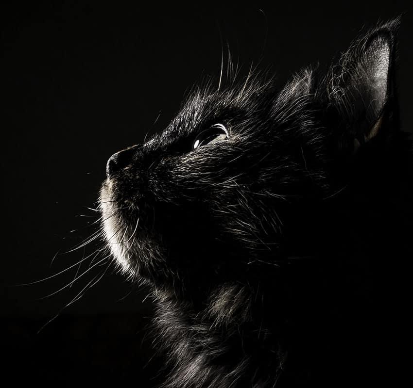 Cat looking up