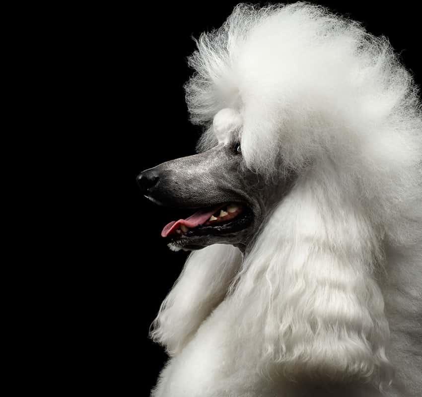 Dog side portrait