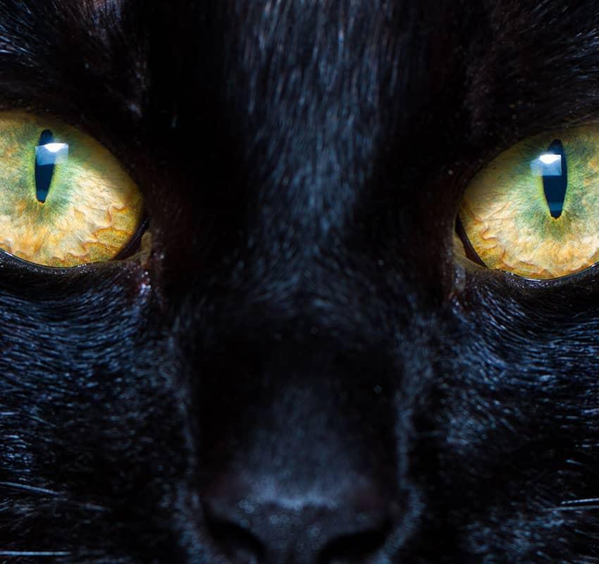 Cat eyes close up