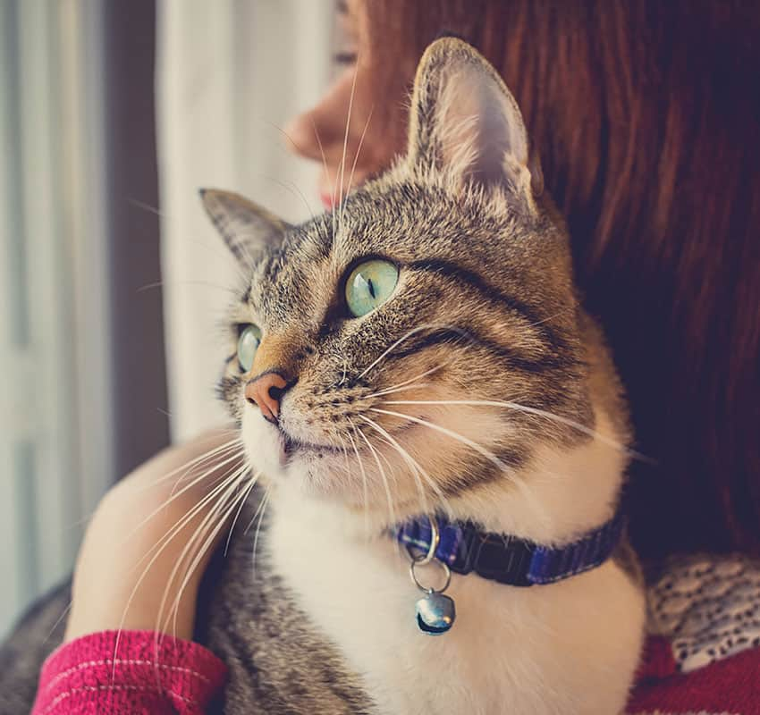 cat-teeth-cleaning-animal-medical-center-of-chicago