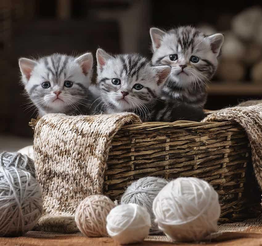 Cute kittens in the basket