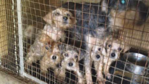 blog-page-puppy-mills-animal-medical-center-of-chicago