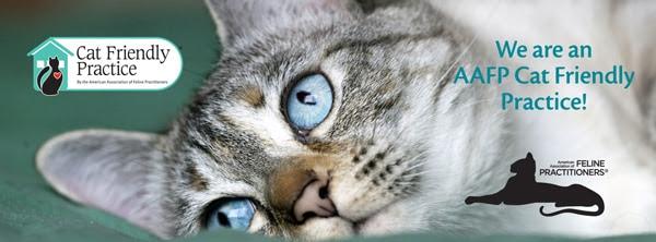 Cat Freiendly Practice