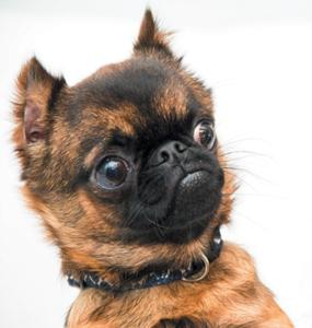 dogs-and-marijuana