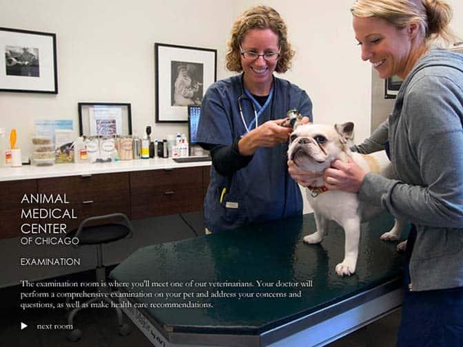 Vet and technician examining dog