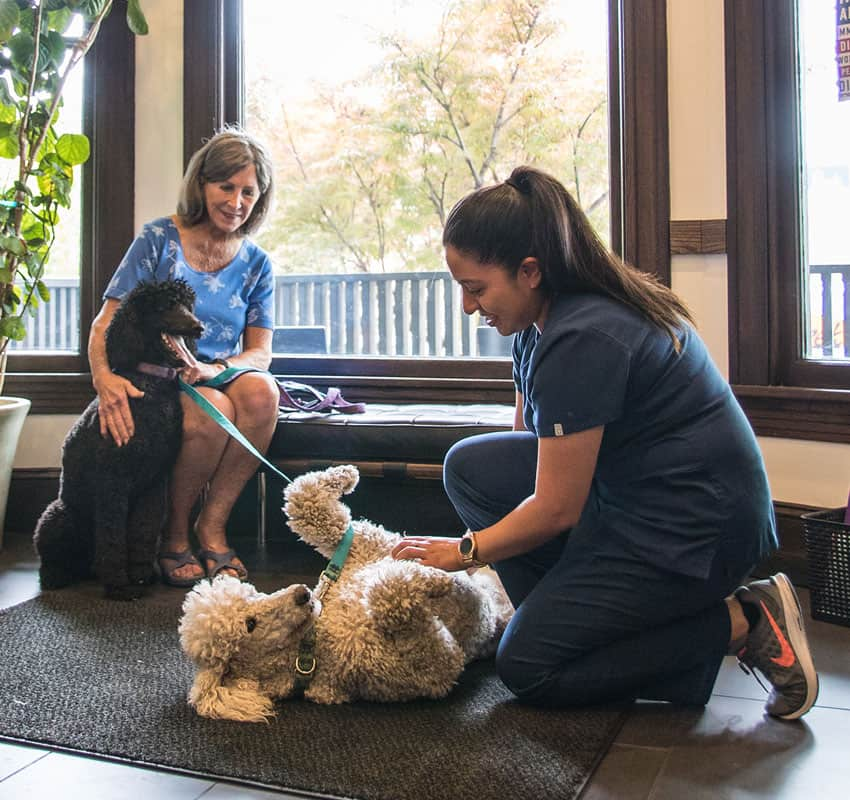 animal-hospital-chicago-animal-medical-center-of-chicago