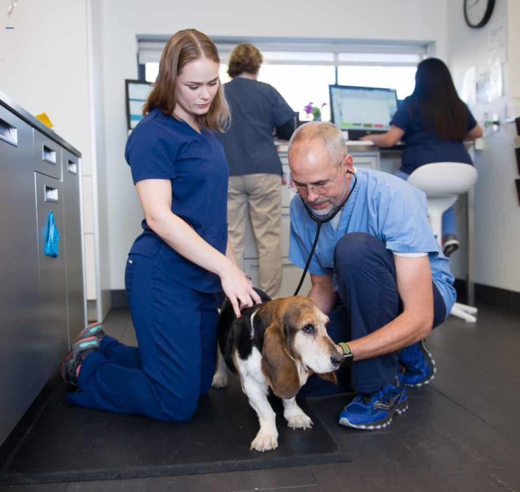 reviews-on-animal-medical-center-of-chicago