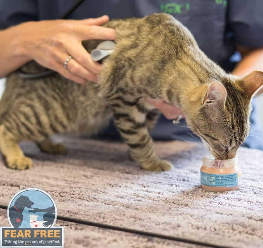 fear-free-pet-animal-hospital-animal-medical-center-of-chicago