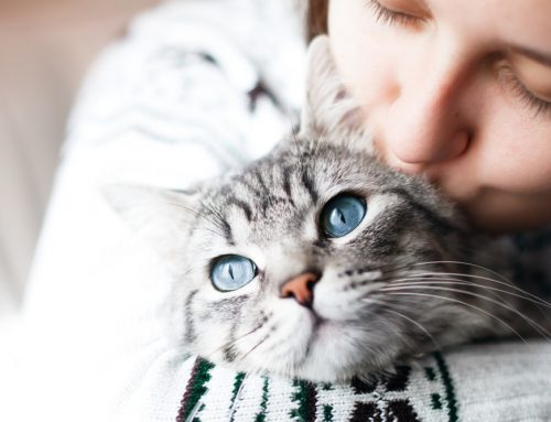 Caring for your healthy cat