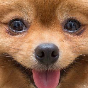Dog face close up